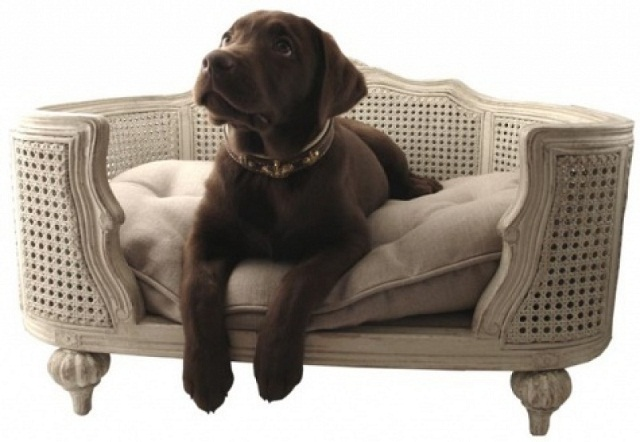 canap ou panier pour chien quelles diff rences. Black Bedroom Furniture Sets. Home Design Ideas
